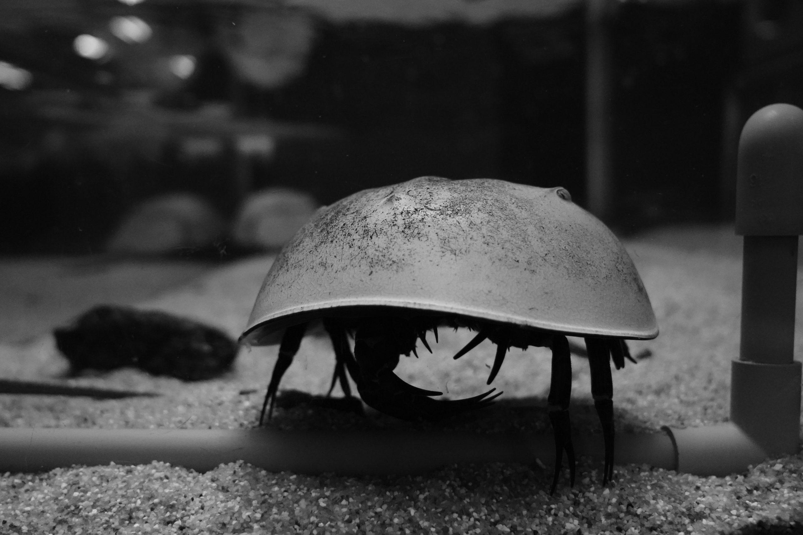 モノクロで撮る「海の世界」竹島水族館(愛知県蒲郡市)#SONY FE 24-105mm F4 G OSS SEL24105G